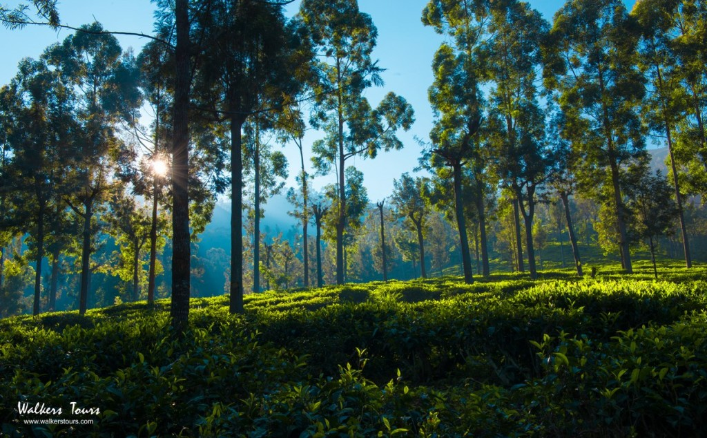 Hill Country Tours in Sri Lanka with Walkers Tours