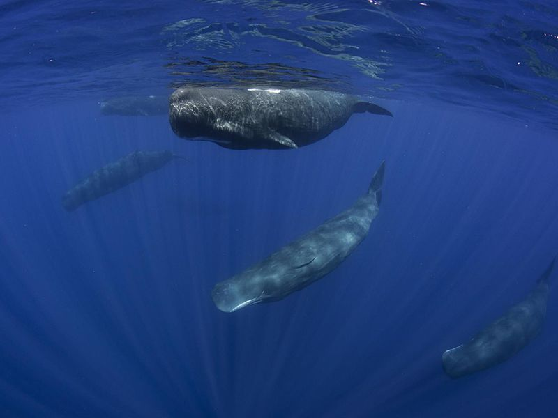 Pictures of sperm whale environment