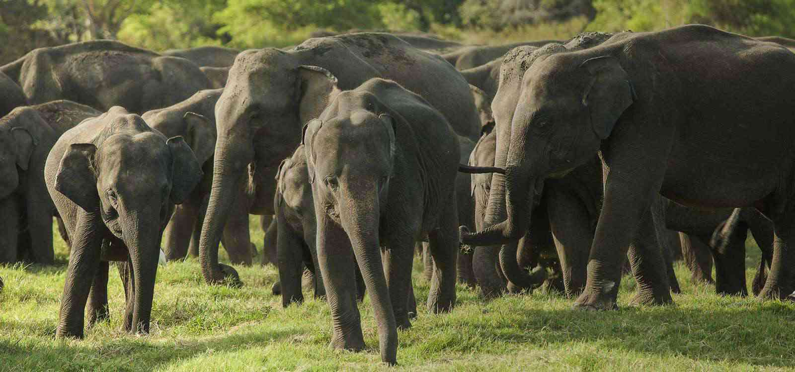 Guide to Wildlife Safari in Yala –  What you should expect