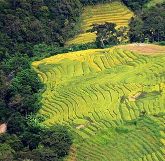 Breathtaking view of Sri Lanka's Terrace Paddy Fields