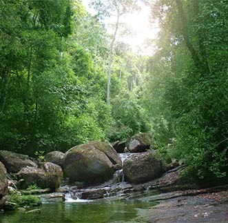 A breathtaking sight of a water stream in the Sinharaja forest
