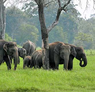 Elephants among the lush greenery at Udawalawe National Park