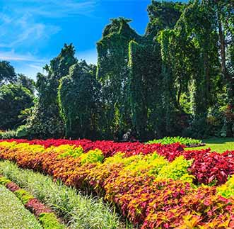 An Alley of multicolured flowers in Peradeniya Botanical Gardens