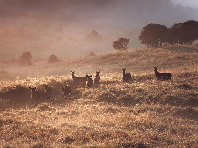 Deer's in grassland habitats in Sri Lanka's wildlife sanctuaries