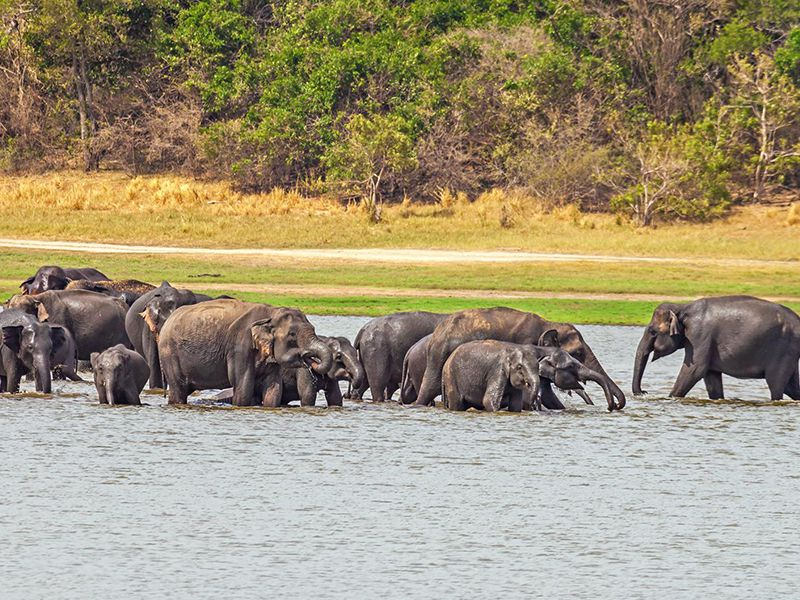 Bath time of a herd of Elephants