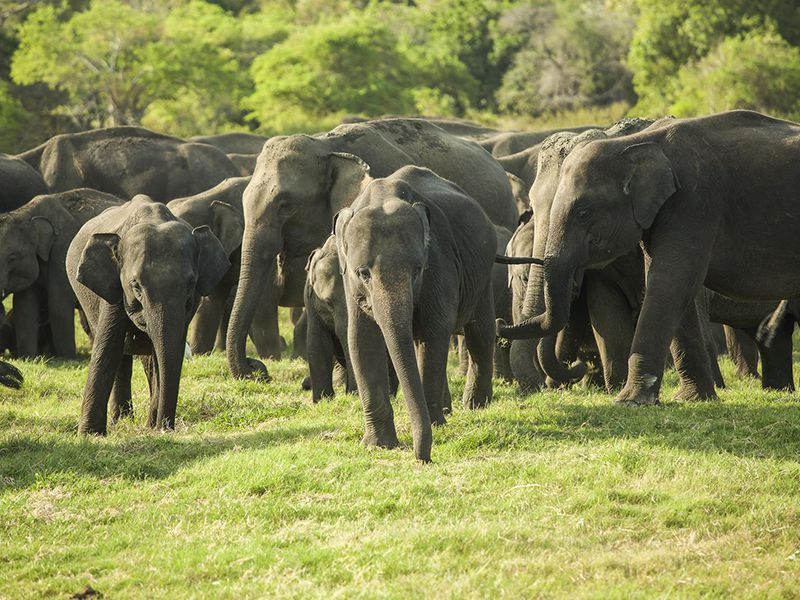 Wildlife & grasslands - home to the Elephants and other exotic species