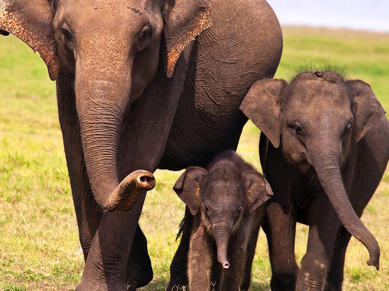 Three Elephants - a family of Elephants