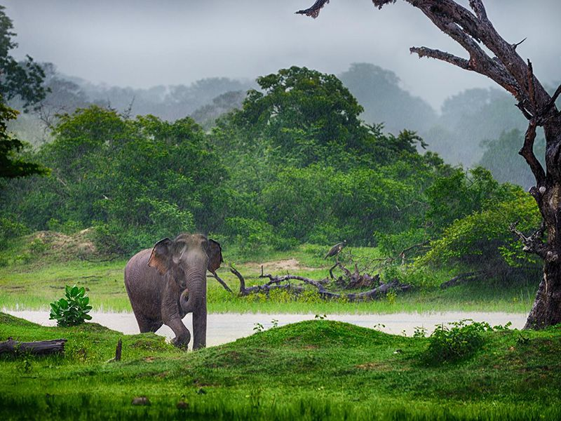 An Elephant grazing along the green prairie , a picturesque moment