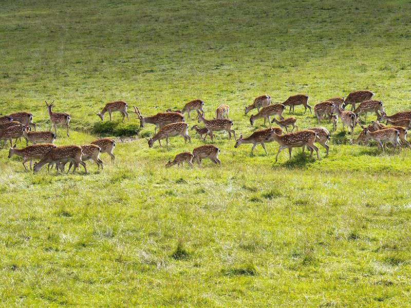 A herd of Deer's in the wilderness