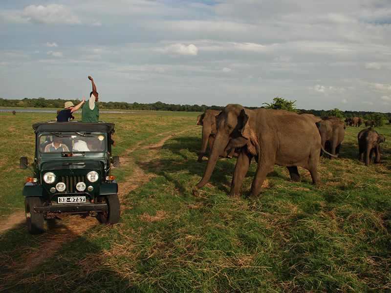 Tourist experience with Elephants in their sanctuary