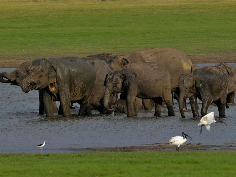 A sanctuary for Elephants among the trees and grasslands