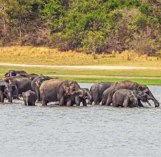 Elephants enjoying a refreshing bath in their sanctury