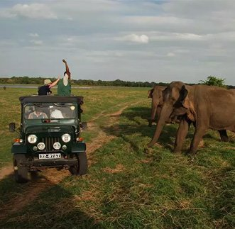 Standard Jeep Safari – Kaudulla in sri lanka