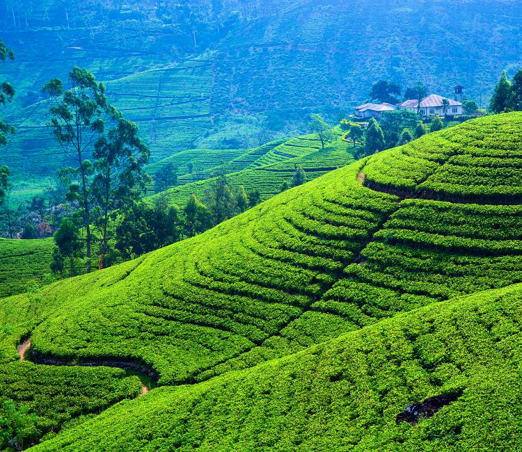 Explore The Hilly Views in Sri Lanka