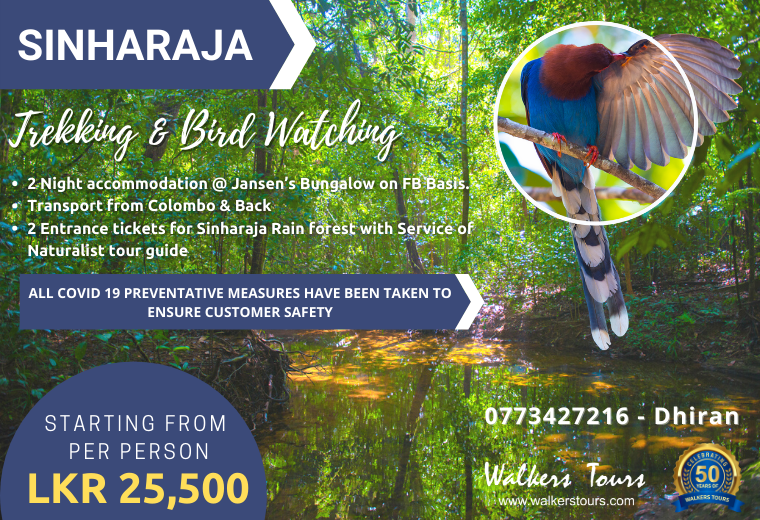 Sinharaja Trekking & Bird Watching