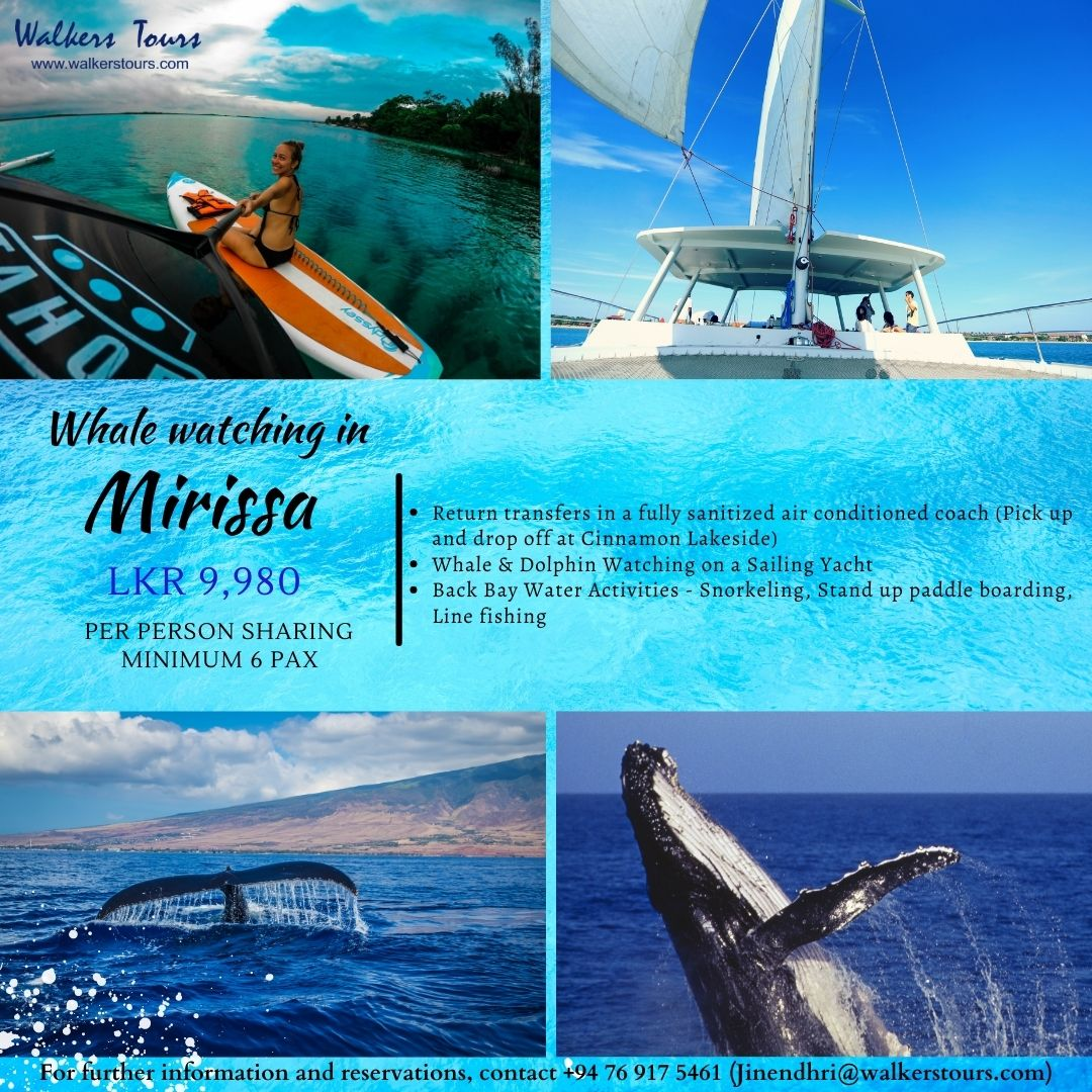 Whale watching - Day package
